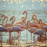 {:ru}Коронавирус-2020: рады только фламинго в Индии{:}{:ua}Коронавірус-2020: раді тільки фламінго в Індії{:}